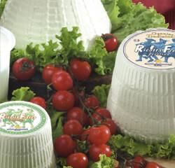 Fresh Sheep Ricotta 0,5-1,5 Kg